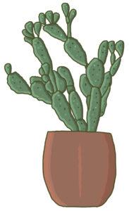o-fleurs-de-magenta-fleuriste-paris-10-cactus-fleurs
